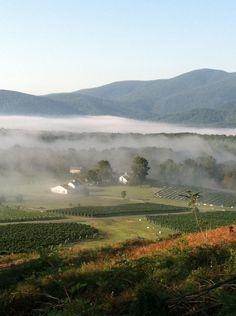 Charlottesville Winery, Virginia