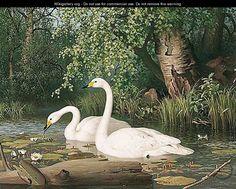 """Whooper Swans On A Lake"",  Ferdinand von Wright (1822-1906)"