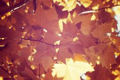 Check out Autumn Leaves by simonalimona on Creative Market