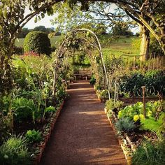 In the kitchen garden, Maynard has a mix of edible and ornamental plants…