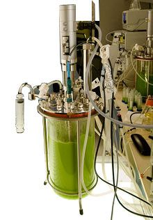 The future is near: Fuel from Algae | The company's researchers feed algae sugar, which the organisms then convert into various types of oil. The oil can be extracted and further processed to make a range of fuels, including diesel and jet fuel, as well as other products.