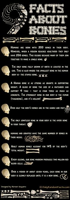 An infographic about bone facts.#Repin By:Pinterest++ for iPad#