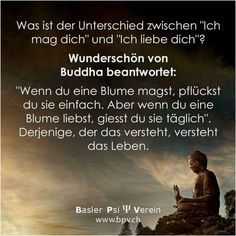 How apt ❤️ How apt ❤️ - Weisheiten - True Quotes, Best Quotes, Funny Quotes, German Quotes, Life Advice, Funny Facts, True Words, Cool Words, Quote Of The Day