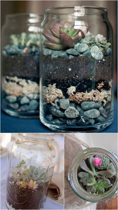 5 new ways to use mason jars: mason jar terraniums | ohlovelyday.com #masonjars