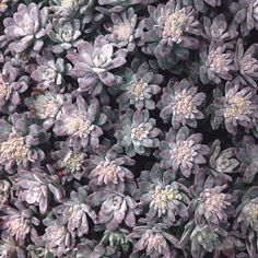 Instagram Post By Pistils Nursery Apr 12 2017 At 8 04pm Utc Shades Of Greengreeneryplumsucculentssucculent Plants