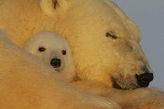 mama keeping her baby warm