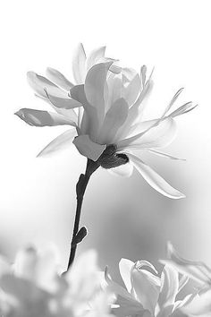 Magnolia #Pinterest Pin-a-way