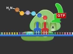 Cool video showing Protein Synthesis (Translation)...