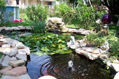 Our koi and goldfish pond. I adore sitting by it and just listening to the waterfall and fountain.~~ Brod pond