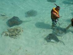 Stingray Adventure @ Half Moon Cay