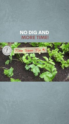 How to have a fantastic garden and to save yourself time and energy! Make quick raised beds, mulch and save watering.... Starter Garden, Sustainable Gardening, Raised Beds, Permaculture, Vegetable Garden, Videos, Plants, How To Make, Vegetables Garden