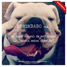 """XERIMBABO (s.m.); em tupi: animal de estimação. lit. """"minha coisa querida""""."""