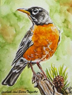 My watercolor study of a robin.