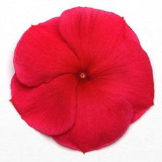 Pacifica Dark Red XP Vinca