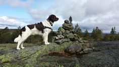 Wuthering height dog Nando ☺