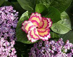 Spray Carnation Card (Gold-Pink)