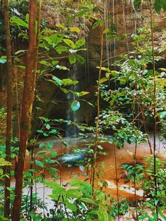 Amazing Places, Brazil, The Good Place, Aquarium, Places To Go, Wanderlust, Green, Painting, Instagram