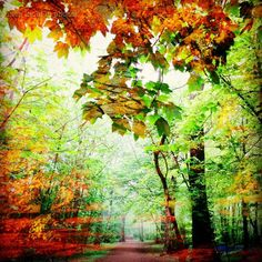 Amalgamation of spring and autumn. #StanmerWoods #StanmerPark #Brighton #woods #nature #naturelover #Brighton_ig #autumncolours #autumnleaves #spring #dianaphotoapp