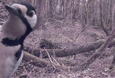 smstext adventures in geocaching and raspberry pi: Nightcam wildlife cam update