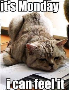 Aww... #monday cat invades again (ↀДↀ)✧
