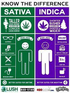 Education of #cannabis #compounds #thc #cbd #linalool #cbg #cbn #myrcene