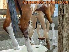 Animopron - Lara anus s koňom