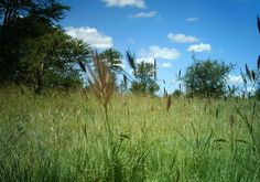 I just classified this image on Snapshot Serengeti! More grasses
