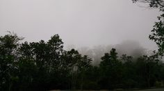 Fog comes to shelter us