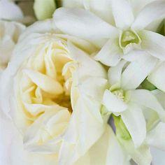 Google Image Result for http://www.brides.com/images/editorial/2008_bridescom/winter_flowers/00_main/010_sec01.jpg