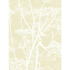 Buy Cole & Son Cow Parsley Wallpaper, Straw on White, 95/9053 Online at johnlewis.com
