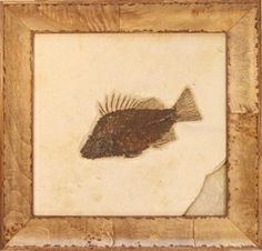 Fish fossil from the Green River Formation!