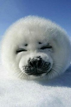 Baby seal. Too adorable!