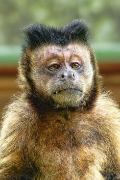 A funny cute monkey Animals And Pets, Baby Animals, Funny Animals, Cute Animals, Animal Antics, Cute Monkey, Tier Fotos, Cute Animal Pictures, Exotic Pets