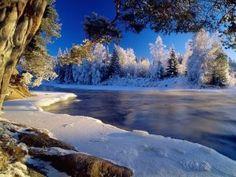 Pinos nevados junto al río