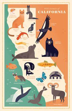 Alexander Vidal - An illustrated map showing key animal species of California. California Condor, California Map, Kangaroo Rat, Wildlife Day, American Black Bear, Elephant Seal, Animal Art Projects, Animal Graphic, Nature Illustration