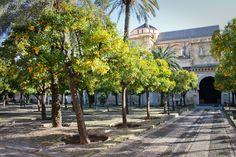 mosque garden - Google Search