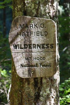 This sign is 4.8 miles from the beginning of the Eagle Creek Trail.  There is also a kiosk here to register your activities in the wilderness, to keep tabs on usage and in case they have to come looking for you.  Columbia Gorge, OR.  08/2010.
