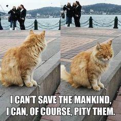 Und die Katze wendet sich beschämt ab