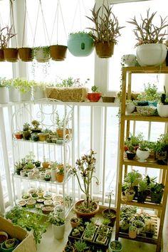 alternative to a garden?