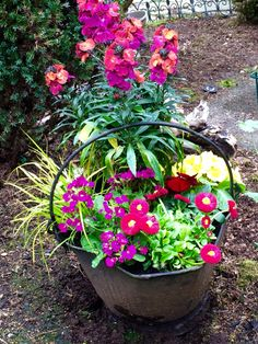 An old coal bucket with perennials and annuals mixed together!