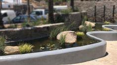 Koi Pond Mykonos - Koi Pond