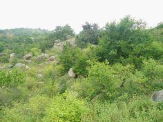 Deccan_Scrub_Forests_at_Mastyagiri_02.JPG 4,000×3,000 pixels