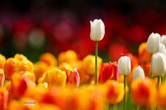 Spring Fever of Jealousy