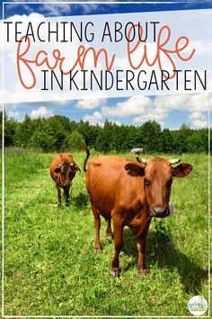 Farm animals make a perfect unit of study for kindergarten in the spring! Engage students by integrating their learning about farm life into a cross curricular math, reading, writing, and science thematic study. This unit includes ready to print elements, as well as low-prep centers to engage all learners.