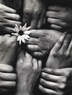 Michel Joly - Hands and Flowers France, 1972.