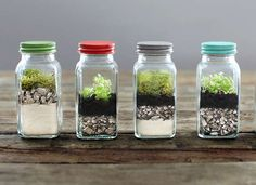 These tiny terrariums would make a beautiful addition to any tabletop, counter, or windowsill