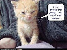 funny pictures - I'm a pwofessional gwump.  I take my job vewy sewious.