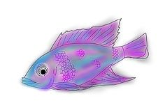 Peacock Cichlid Fish by Storm-Cwalker.deviantart.com on @DeviantArt