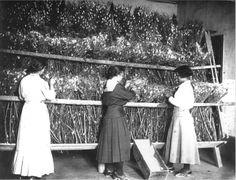 Allevamento di bachi da seta.