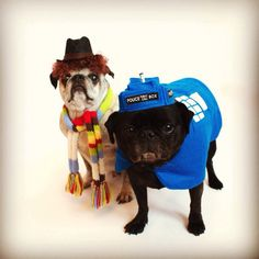 lancmaltby:  My pugs getting ready for Halloween - Dr. Who and the Tardis